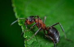 муравьиный спирт